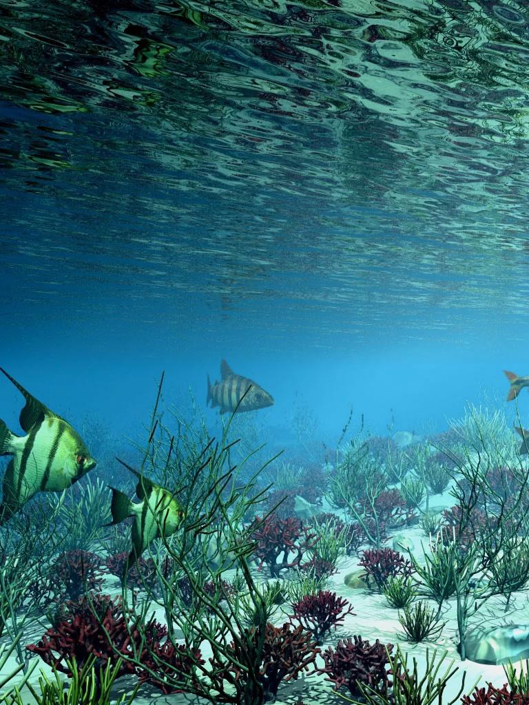d Underwater Wallpaper Download cool HD wallpapers