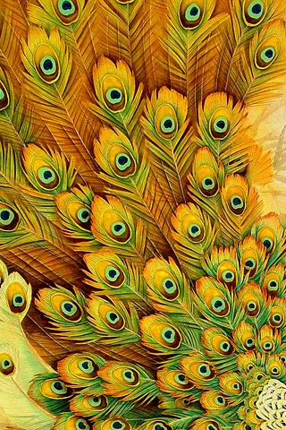 Beautiful Peacock Feathers Android Wallpaper
