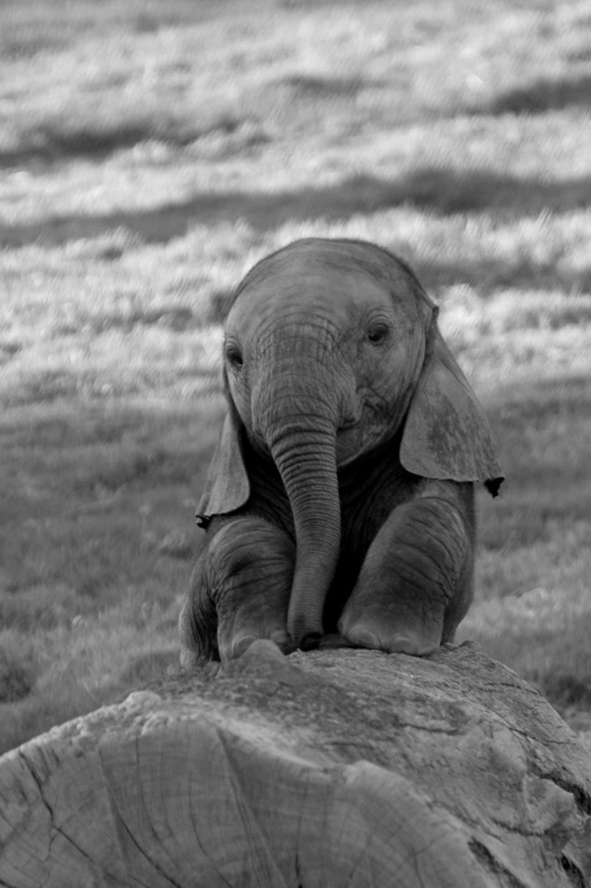 Must see Wallpaper Home Screen Elephant - cute-baby-elephant  Collection_704179.jpg