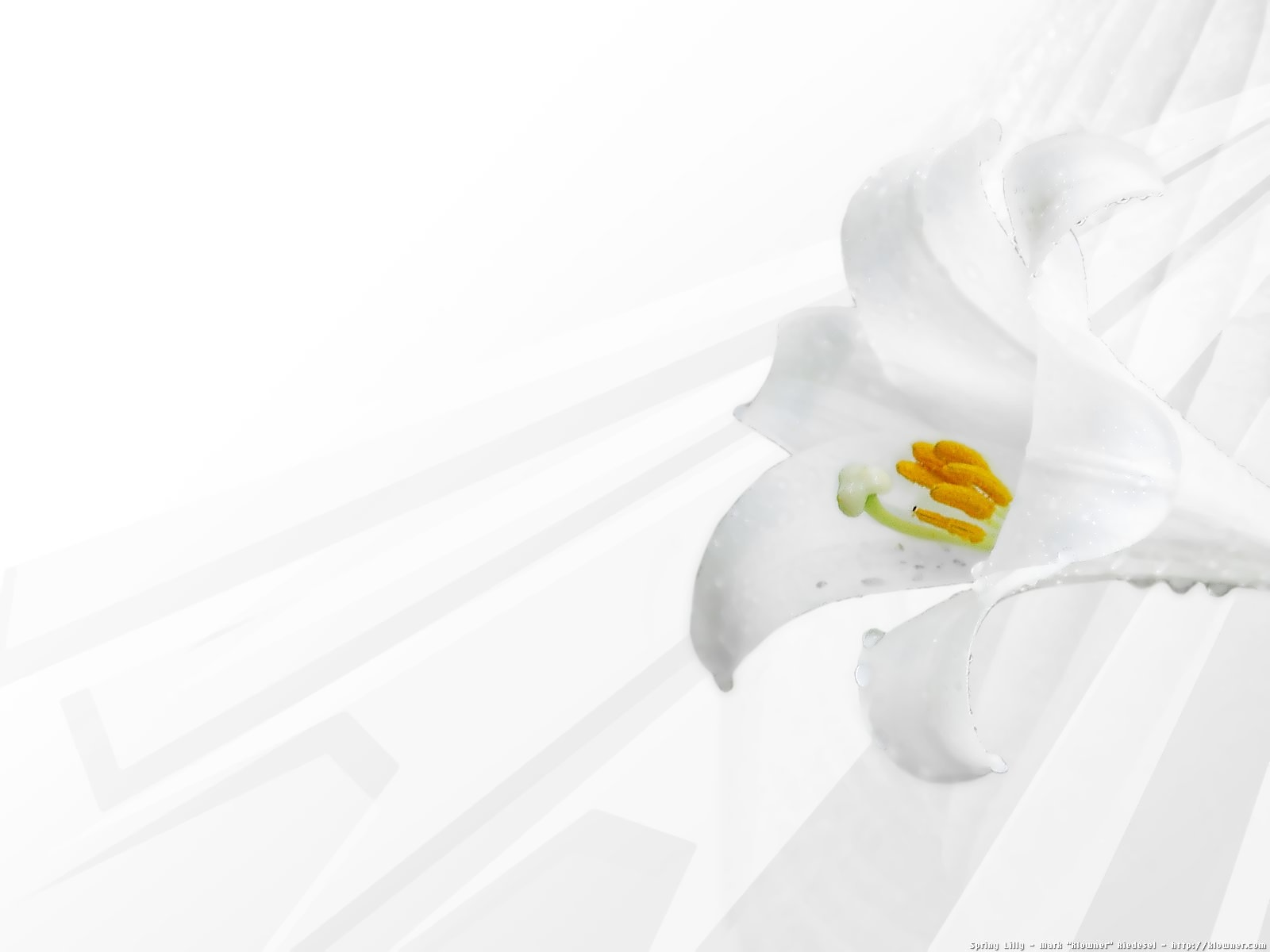 Android wallpaper hd white flower android wallpaper white flower android wallpaper mightylinksfo